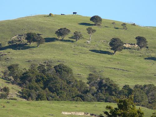 Собственно сам холм Таумата.